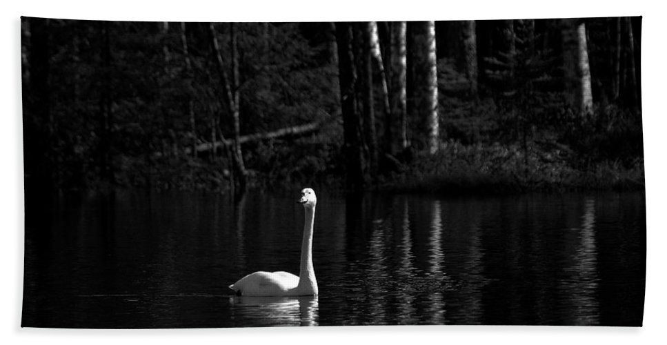Lehtokukka Hand Towel featuring the photograph Whooper Swan In Bw 1 by Jouko Lehto
