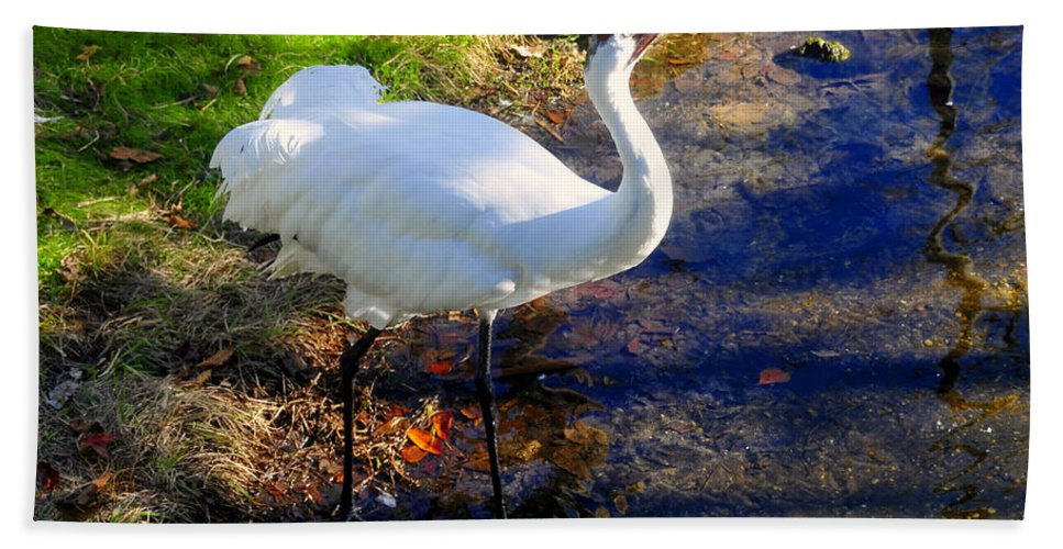 Whooping Crane Hand Towel featuring the photograph Whooping Crane by David Lee Thompson