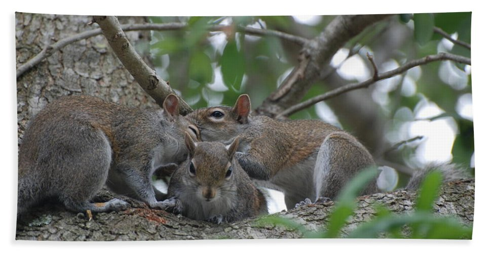 Squirrel Hand Towel featuring the photograph Why Me by Rob Hans