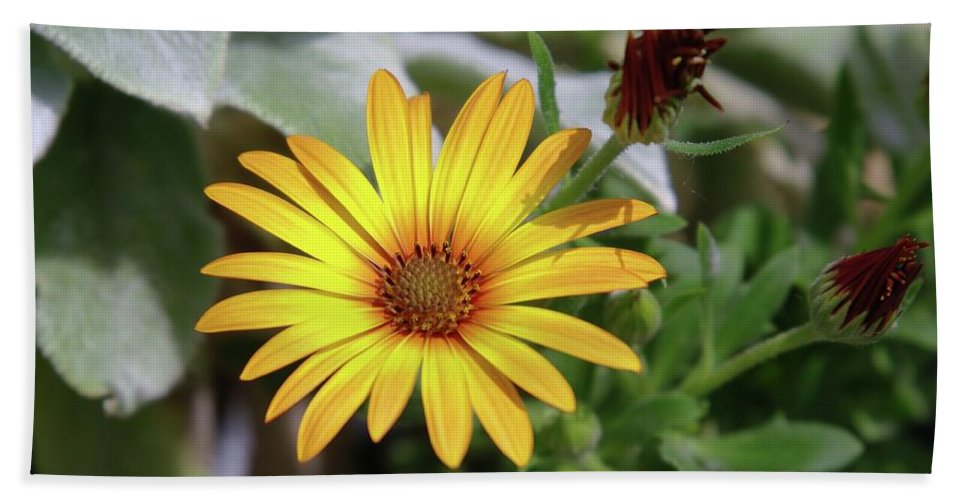 Flowers Bath Sheet featuring the photograph Wide Open In Bloom by Jeff Swan