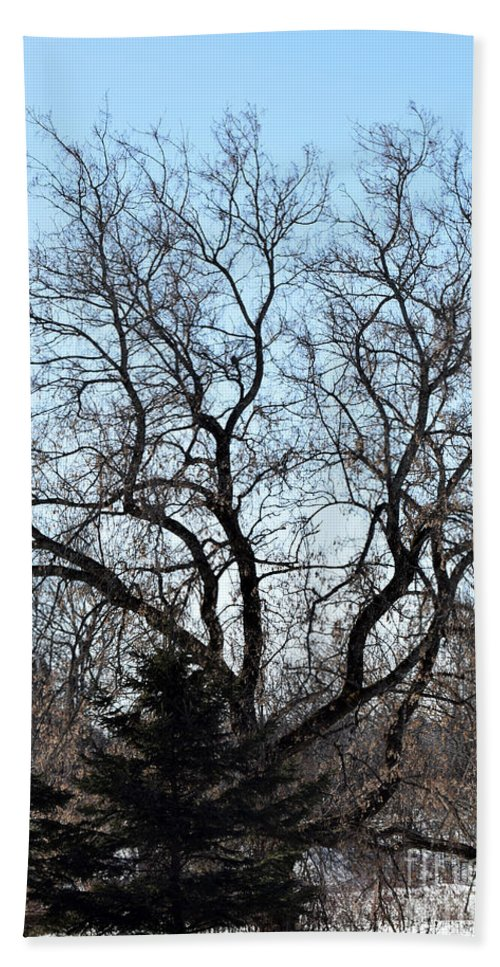 Tree Hand Towel featuring the photograph Widespread by William Tasker
