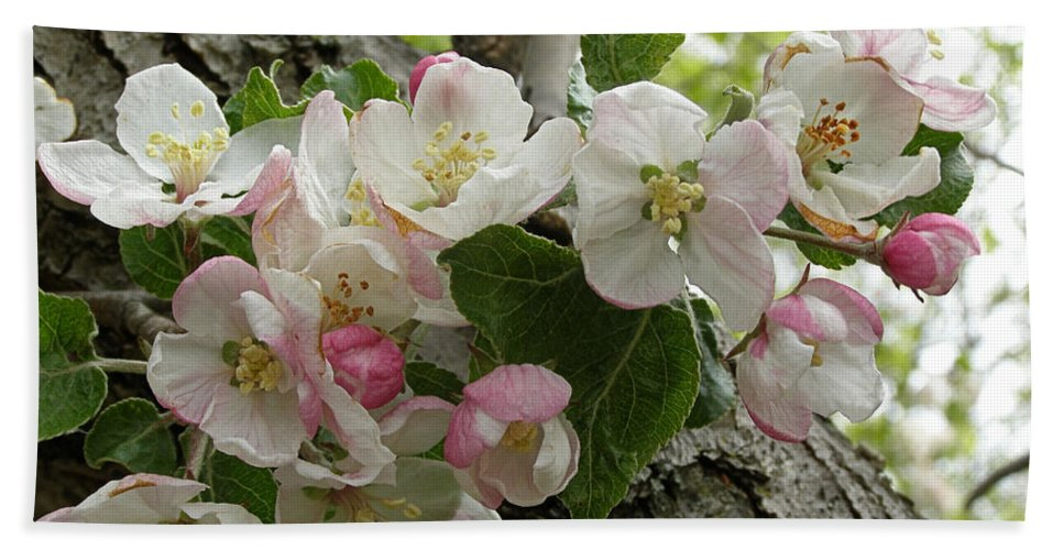 Apple Blossoms Hand Towel featuring the photograph Wild Apple Blossoms by Angie Rea