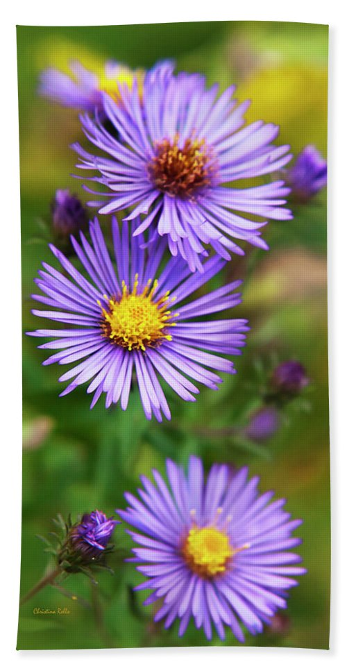 Wildflower Bath Towel featuring the photograph Wild Aster Trio by Christina Rollo