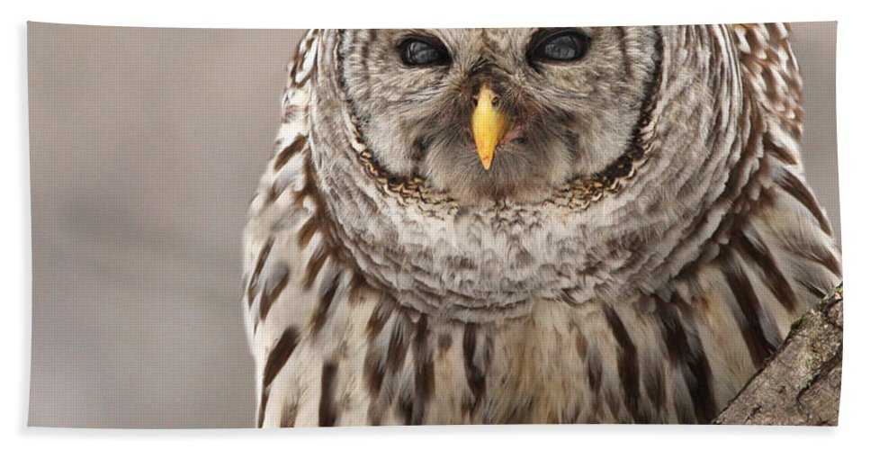 Animal Hand Towel featuring the photograph Wild Barred Owl With Prey by Mircea Costina Photography
