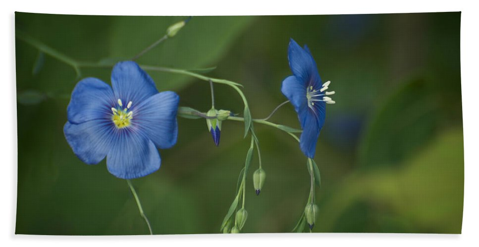 Beautiful Hand Towel featuring the photograph Wild Blue by Craig Voth