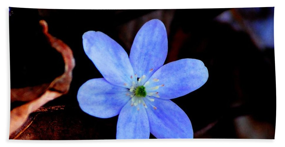 Digital Photo Hand Towel featuring the photograph Wild Blue by David Lane