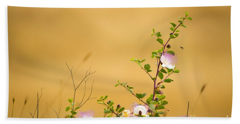 Common Bath Sheet featuring the photograph wild caper plant Capparis spinosa by Alon Meir