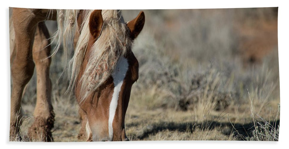 Cody Bath Towel featuring the photograph Wild Horse by Frank Madia