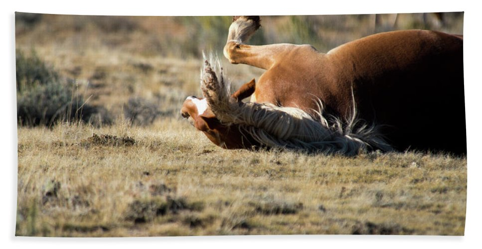 Cody Bath Towel featuring the photograph Wild Horse With and Itch by Frank Madia
