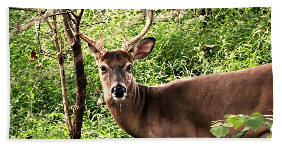 Deer Bath Sheet featuring the photograph Wild In The Country by Tami Quigley