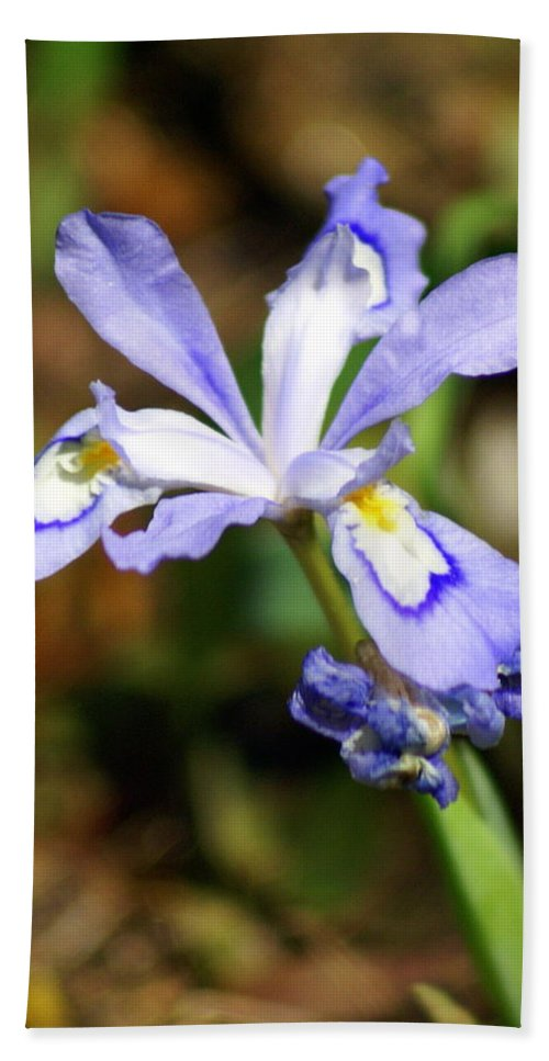 Wild Iris Hand Towel featuring the photograph Wild Iris by Marty Koch
