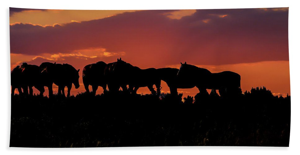 Horses Hand Towel featuring the photograph Wild Mustangs At Sunset by Tommy Anderson
