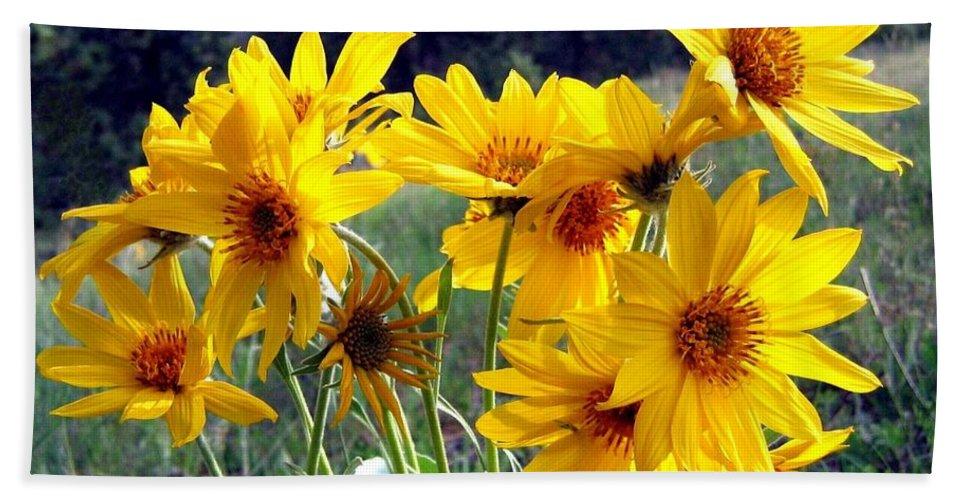 Sunflowers Hand Towel featuring the photograph Wild Okanagan Sunflowers by Will Borden