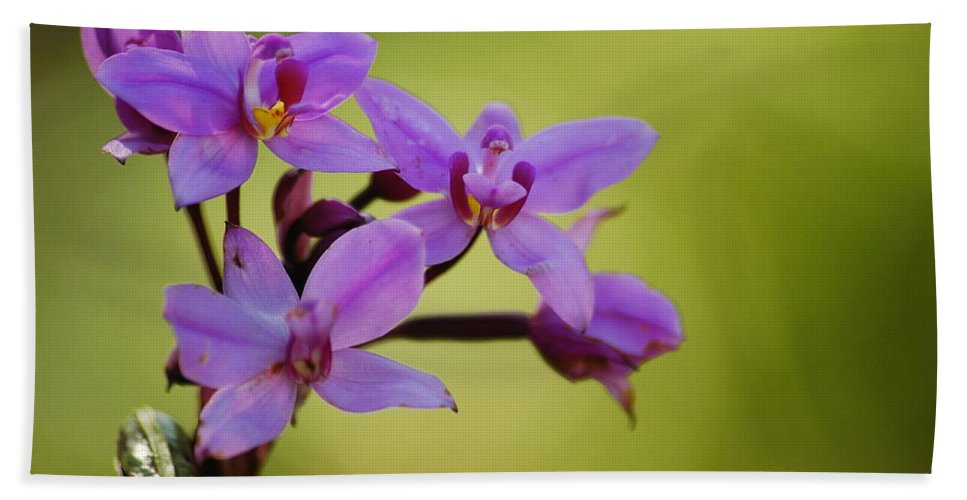Wildflower Hand Towel featuring the photograph Wild Orchids 2 by Michael Peychich