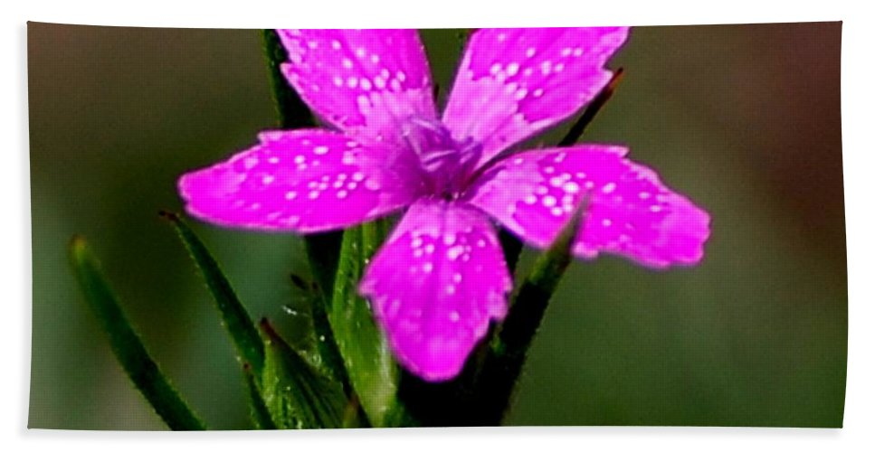 Digital Photo Hand Towel featuring the photograph Wild Pink by David Lane