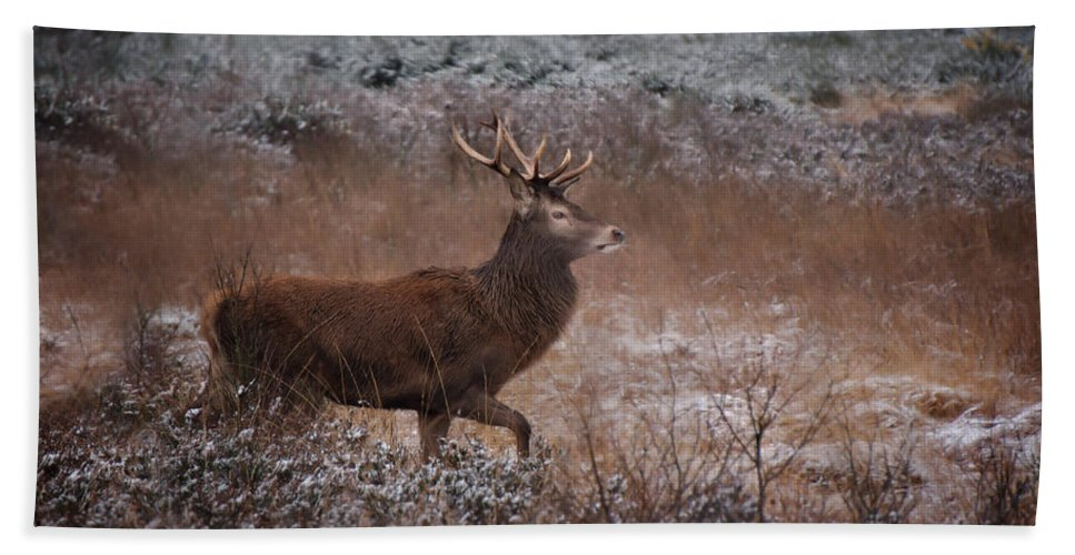 Antlers Hand Towel featuring the photograph Wild Winter Stag by Rawshutterbug