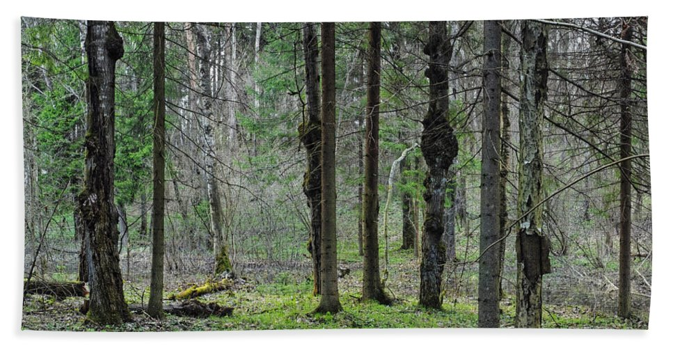 Wild Hand Towel featuring the photograph Wild Spring Forest by Vadzim Kandratsenkau