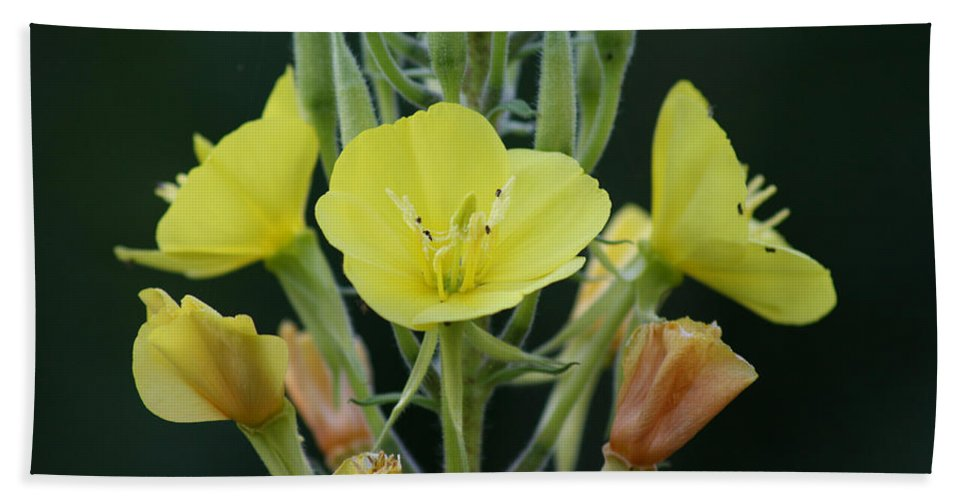 Flower Wild Yellow Green Orange Plants Garden Digital Bath Sheet featuring the photograph Wild Yellow by Andrea Lawrence