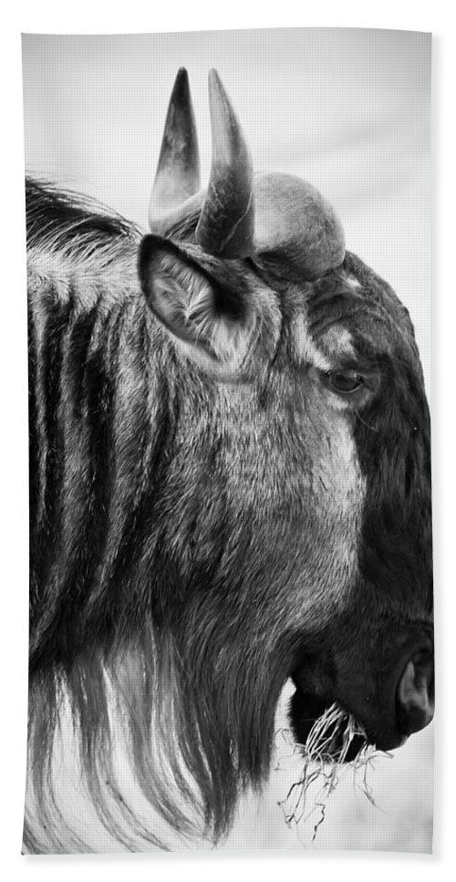 3scape Photos Hand Towel featuring the photograph Wildebeest by Adam Romanowicz