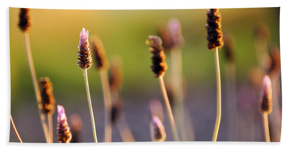 Nature Hand Towel featuring the photograph Wildflower 2 by Jill Reger