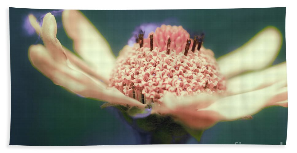 Flower Bath Towel featuring the photograph Wildflower by Joel Friedman