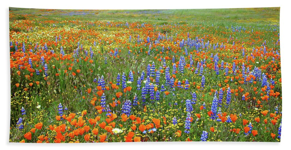 Wildflowers Bath Sheet featuring the photograph Wildflower Wonderland 4 by Lynn Bauer