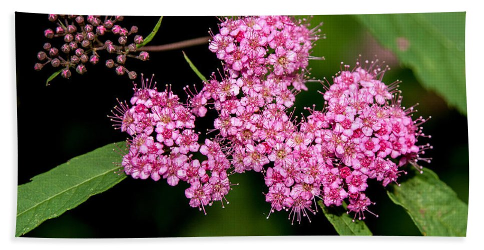 Flower Bath Sheet featuring the photograph Wildflowers Come In Many Sizes by John Haldane