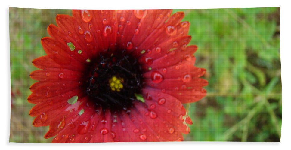 Wildflower Bath Sheet featuring the photograph Wildflower Water Drops by Michael MacGregor