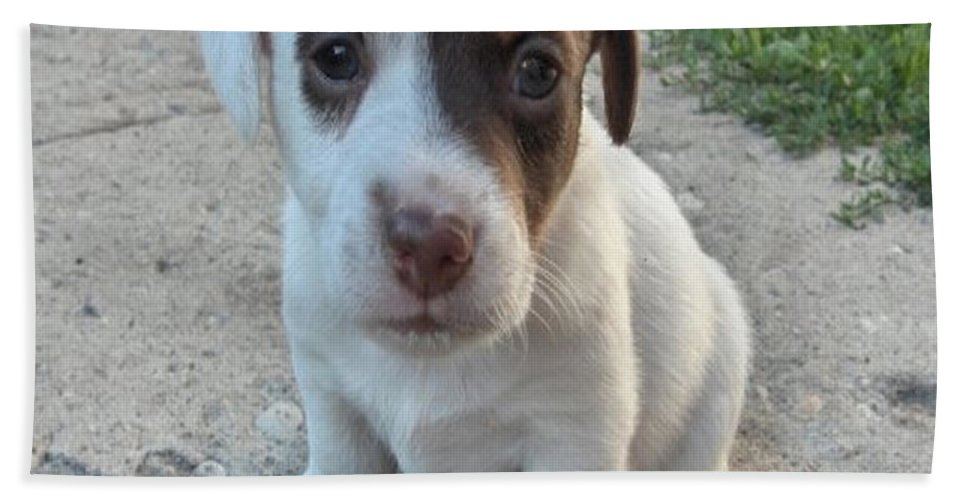 Puppy Jack Russell Terrior Dog Dogs Pets Animals Domestic Puppies Cute Hand Towel featuring the photograph Will You Be My Friend by Andrea Lawrence