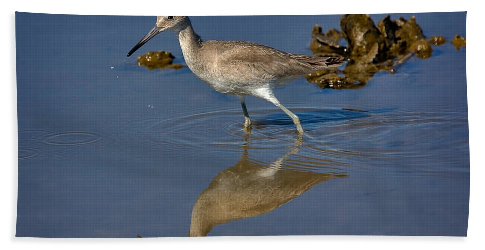 Nature Hand Towel featuring the photograph Willet Searching For Food In An Oyster Bed by Louise Heusinkveld