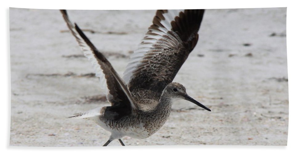 Willet Bath Sheet featuring the photograph Willet Take-Off by Barbara Bowen