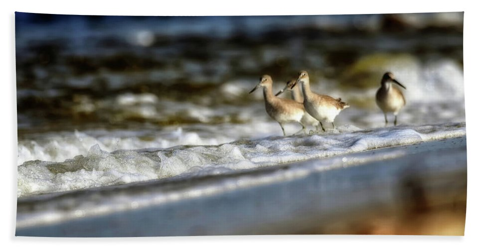 Seascape Bath Sheet featuring the photograph Willets In The Waves by Joseph Rainey
