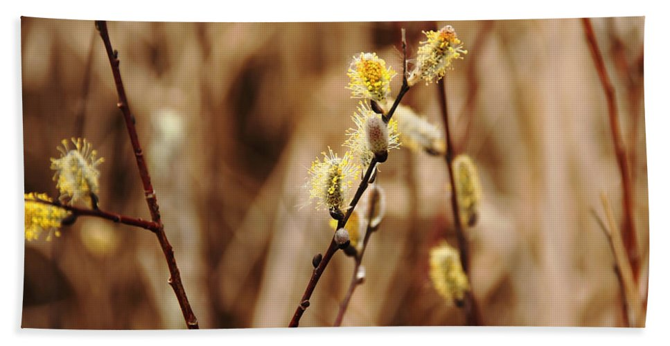 Pussy Willows Hand Towel featuring the photograph Willow Catkins by Debbie Oppermann