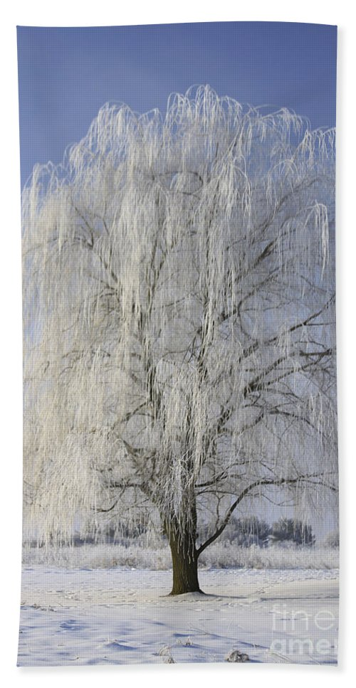 Willow Hand Towel featuring the photograph Willow In Ice by Deborah Benoit