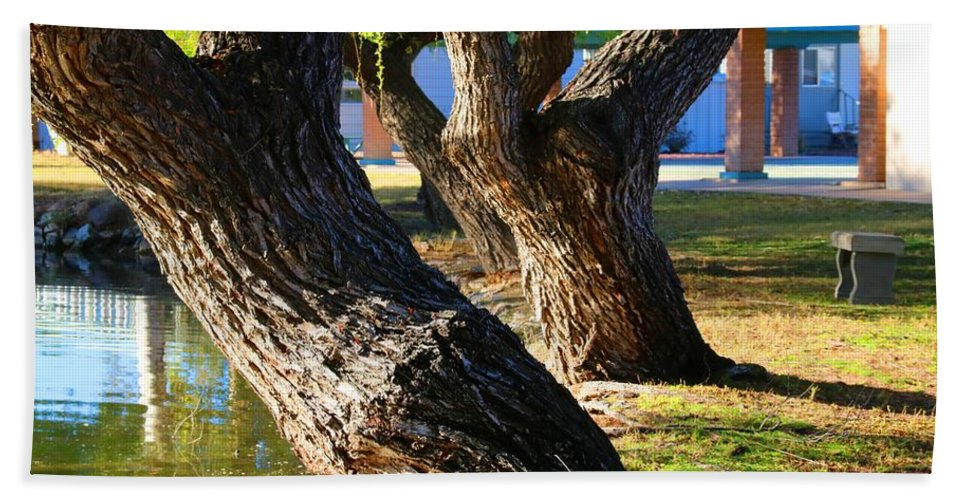 Willow Trees Hand Towel featuring the photograph Willow Trees by Kathryn Meyer