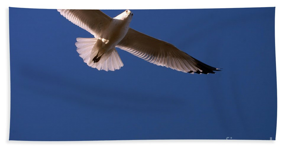 Clay Hand Towel featuring the photograph Wind Beneath My Wings by Clayton Bruster