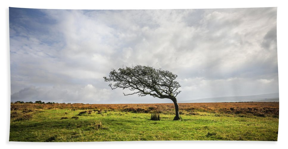Tree Bath Sheet featuring the photograph Windswept Tree by David Hare