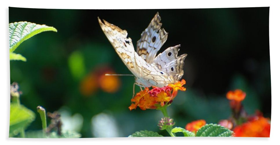 Butterfly Bath Sheet featuring the photograph Winged Butter by Rob Hans