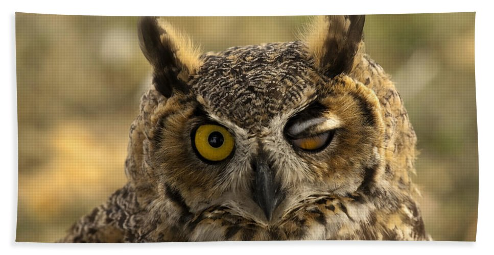 Owl Bath Towel featuring the photograph Wink by Mike Dawson