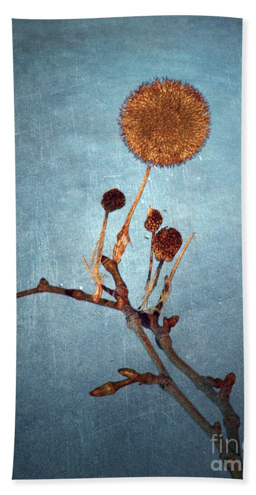 Blue Hand Towel featuring the photograph Winter Branch by Tara Turner