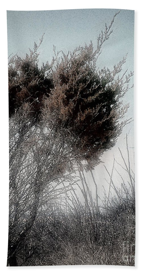 Beach Hand Towel featuring the painting Winter Cedar by RC DeWinter