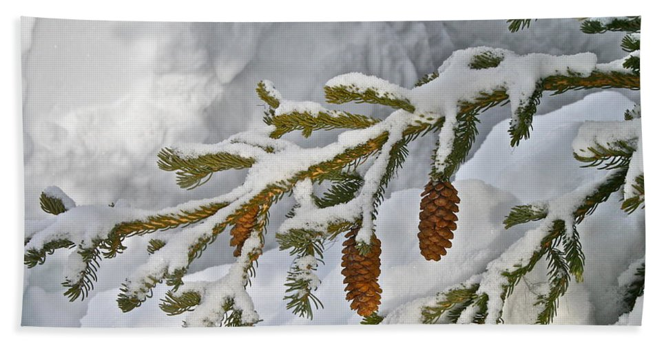 Snow Bath Towel featuring the photograph Winter Dusting by Rick Monyahan