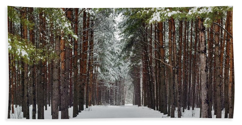 Attractive Bath Sheet featuring the photograph Winter Forest by Vadzim Kandratsenkau