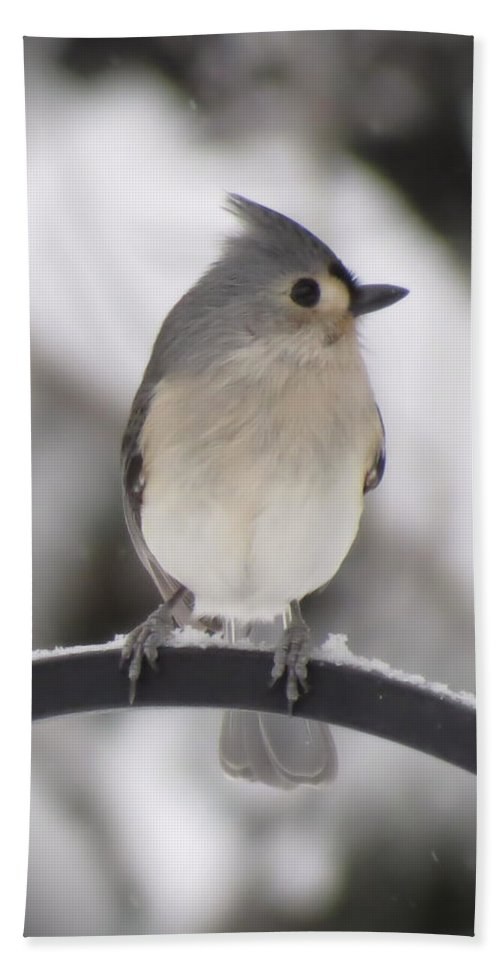 Bird Bath Sheet featuring the photograph Winter Gray - Bird by MTBobbins Photography