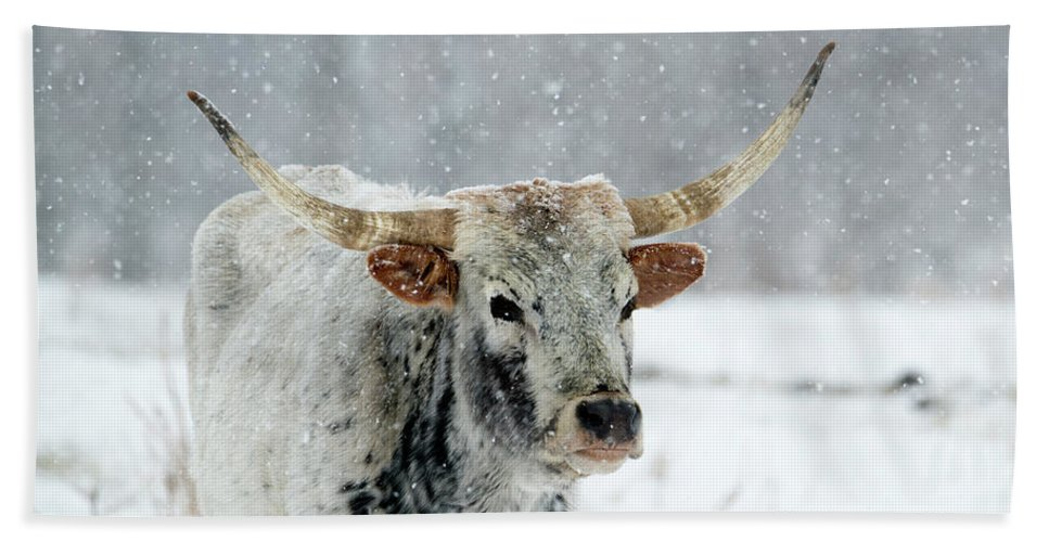 Longhorn Hand Towel featuring the photograph Winter Longhorn by Mike Dawson