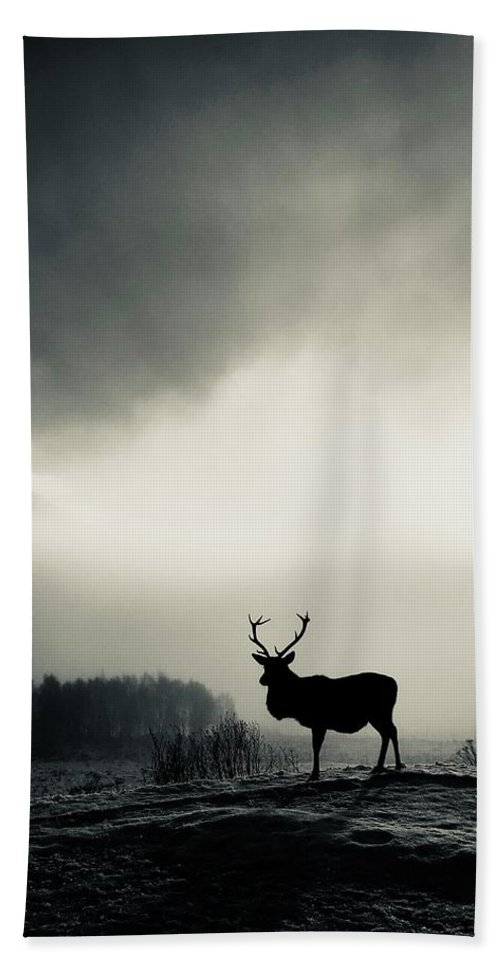 Stag Bath Sheet featuring the photograph Winter Stag by Martine Fulford