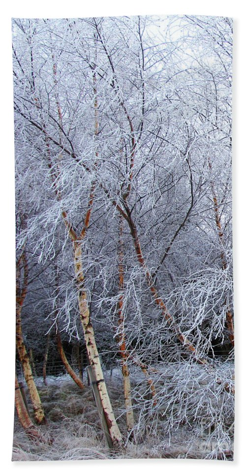Trees Hand Towel featuring the photograph Winter Trees by Jacqi Elmslie