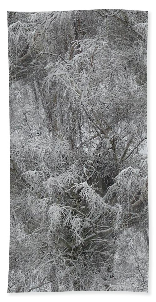 Winter Hand Towel featuring the photograph Winter Trees by Tim Allen