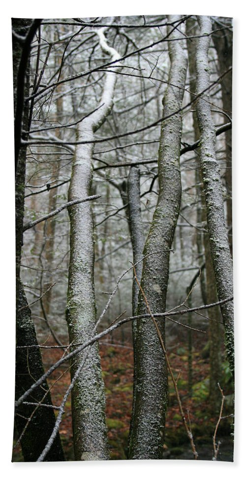 Tree Woods Forest Wood Snow White Green Winter Season Nature Cold Hand Towel featuring the photograph Wintery Day by Andrei Shliakhau