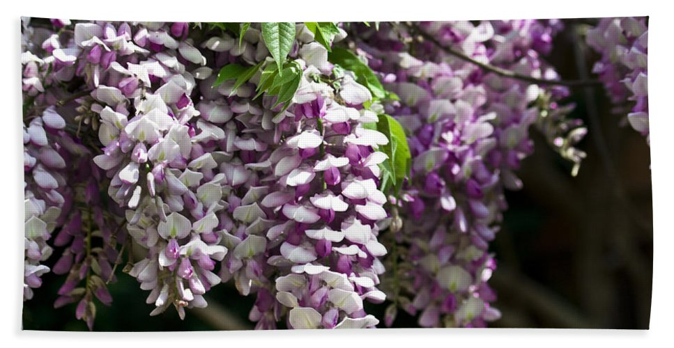 Wisteria Hand Towel featuring the photograph Wisteria by Teresa Mucha